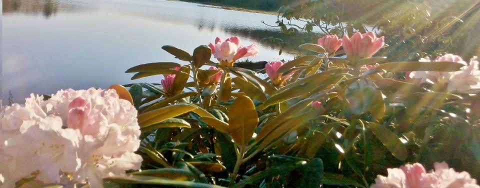 Eastern Plant